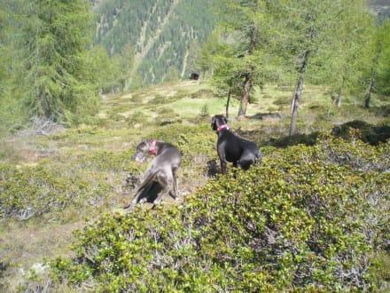 Abstieg - Wandern Ultental