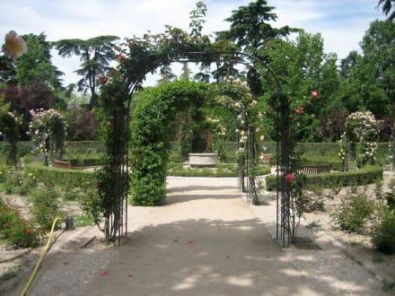 Rosengarten im Campo del Moro - Jardines del Campo del Moro