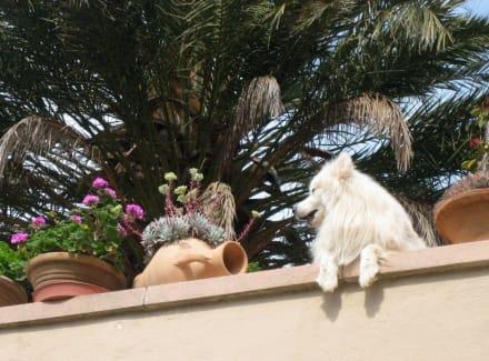 Fornalutx - mallorqinischer Wachhund... - Bergdorf Fornalutx