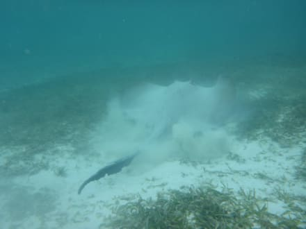 Super Timing - Schnorcheln Hausriff Summer Island Village Nord-Malé-Atoll
