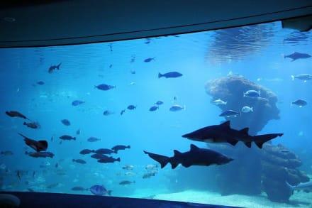 Palma Aquarium - Big Blue - Palma Aquarium