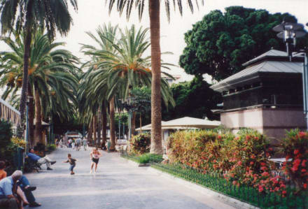 Der Plaza del Charco in Puerto de la Cruz - Plaza del Charco