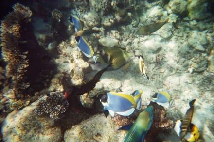 Hausriff - Tauchen Ari Atoll