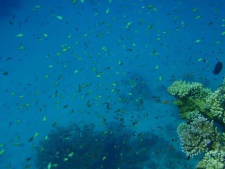 Sonst. Unterwassermotiv - Sharm el Loli