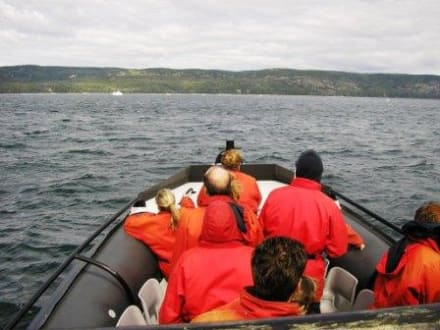 Wo sind die Wale? - Whale Watching Tadoussac