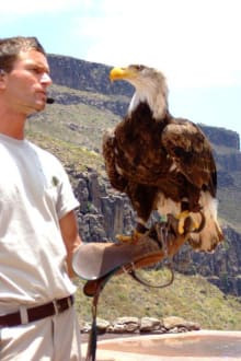 Beeindruckende Greifvogelshow - Palmitos Park