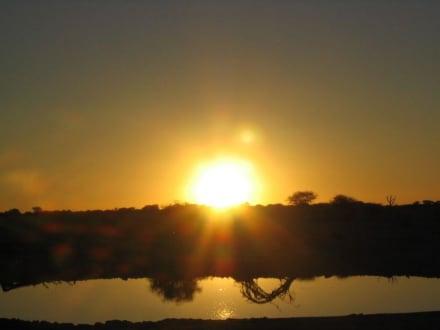 Abend am Wasserloch - Etosha Nationalpark