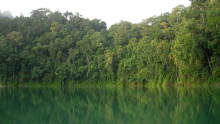 Khao Sok - Khao Sok Nationalpark