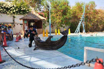 Naturreservat/Zoo - Delfinarium Dolphinella Sharm el Sheikh