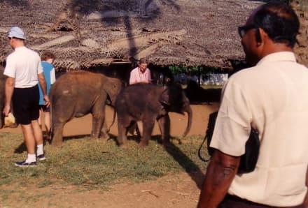 Elephant Orphanage - Elefantenwaisenhaus Pinnawela
