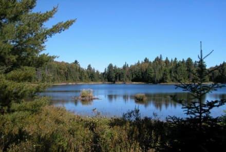 Biber am Peck Lake - Algonquin Provincial Park