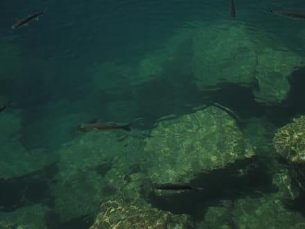 Fische im Hafenbecken - Hafen Puerto de Mogán