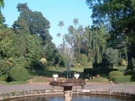 Botanischergarten - Botanischer Garten Peradeniya