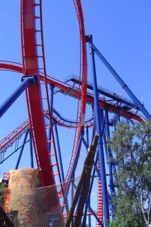 Achterbahn Sheikra - Busch Gardens