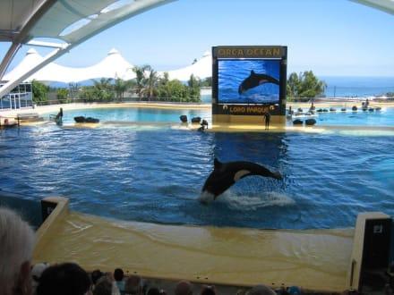 Orca Ocean Show - Loro Parque