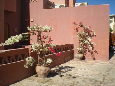 Mediterranstil - Ausflug nach El Gouna