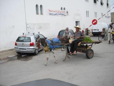 Auf dem Weg zum Markt - Kamelmarkt Nabeul