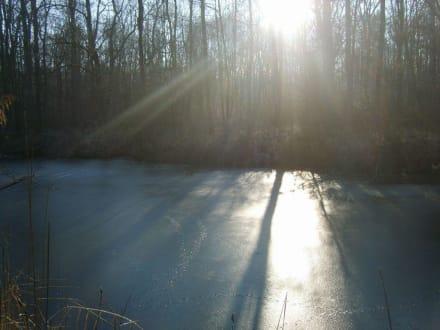 Sonnenstrahlen auf dünnem Eis - Plattling