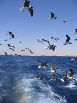 Einmalige Erlebnisse - Schnorcheln Hurghada