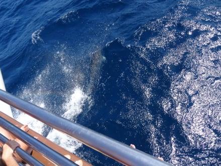 Delfintour - Delfin Tour Puerto Rico
