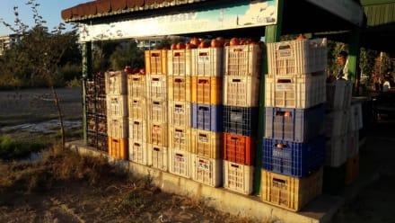 Alle Kisten voll mit Granatäpfel - Neumanns Park Restaurant
