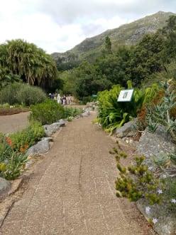 Naturreservat/Zoo - Botanischer Garten Kirstenbosch