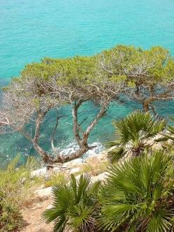 Küstenvegetation - Strand Canyamel