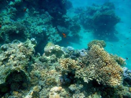 Sharm El Naga - Tauchen Hurghada
