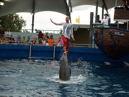 Miami Seaquarium - Seaquarium