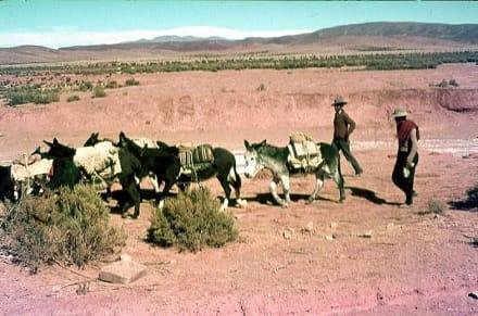 Die Slz-Karawane auf dem Weg nach Bolivien. - Bolivien-Tour