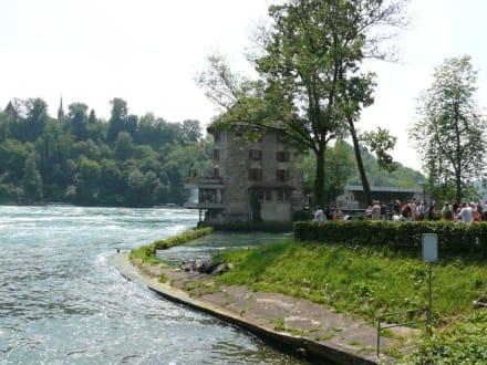 Das Ufer - Rheinfall von Schaffhausen
