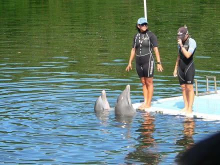 Trainer mit Delfinen - Delfinarium Varadero
