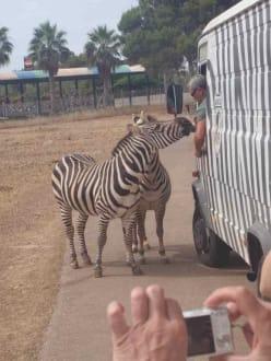 Nature reserve/Zoo - Safari Zoo- Mallorca
