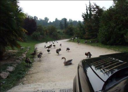 mitten am Weg - Natura Viva Park