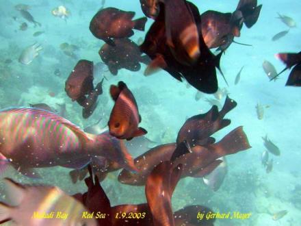 1-2-Fly Fun Club Makadi / Makadi bay / Ägypten - Tauchen Makadi Bay