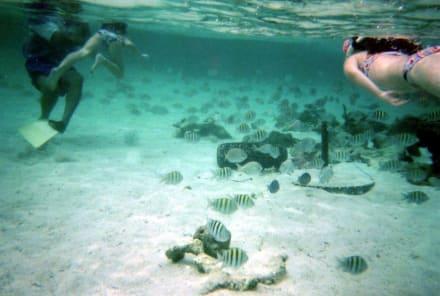 Schnorcheln auf den Paradiesinseln - Schnorcheln Maimon