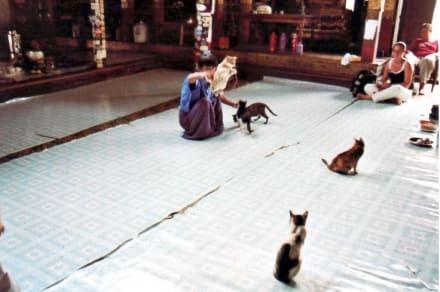 Stündliche Katzenshow - Tempel der springenden Katzen