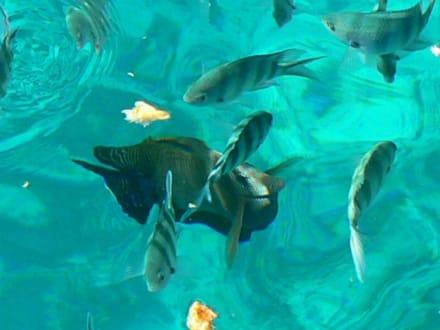 Aquarium - Schnorcheln El Gouna