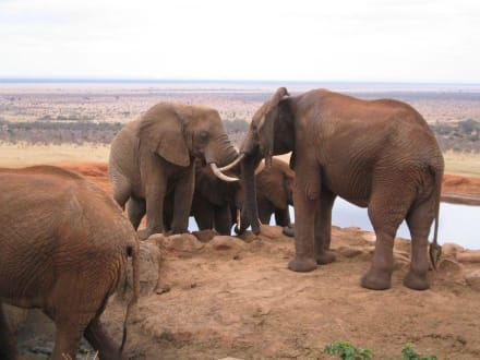 Elefanten - Tsavo Ost Nationalpark
