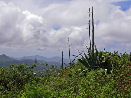 Isla Margarita - El Guamache