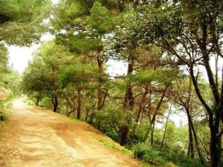 Weg zum Wachturm über Puerto Soller - Wandern Puerto de Soller