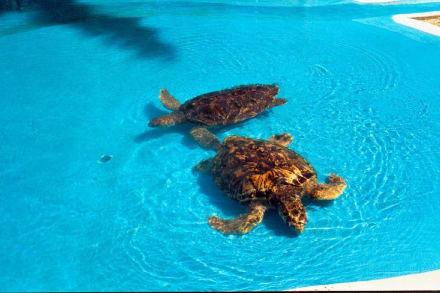 Schildkröten - Meeresschildkrötenstation Projeto Tamar
