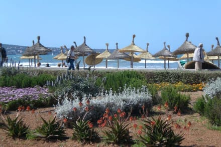 Gepflegte Strandpromenade - Strandpromenade Playa/Platja de Palma