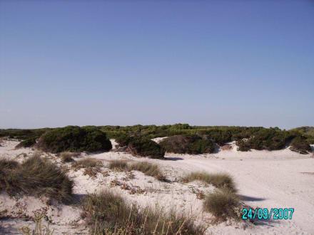 In den Dünen - Platja Es Trenc