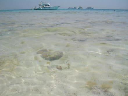 Mahmya-Rotes Meer - Giftun / Mahmya Inseln