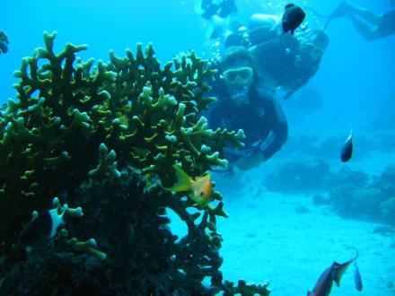 Unterwasser - Tauchbasis Aquarius Divers Makadi Bay