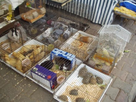 Tierhandlung in Manavgat - Markt
