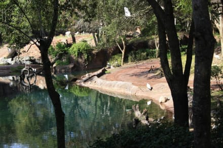 Park - Animal Kingdom
