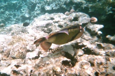 Unterwasser - Schnorcheln Sharm el Sheikh