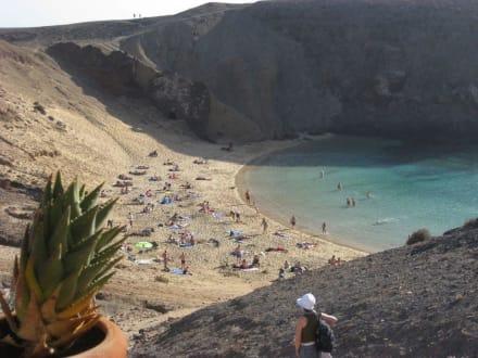 Plaza Papuzia - Playa de Papagayo